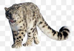 Leopard - Snow Leopard Tiger Clip Art PNG