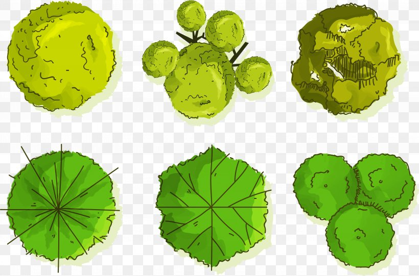 Tree Euclidean Vector Shrub, PNG, 5042x3330px, Tree, Grass, Green, Leaf, Organism Download Free