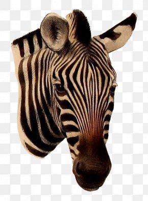 Zebra - Quagga Burchell's Zebra Mountain Zebra Grévy's Zebra PNG