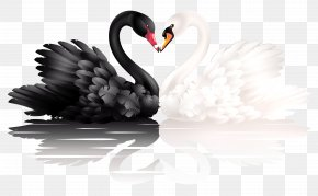 Black And White Swan - Black Swan Clip Art PNG