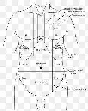 Gray's Anatomy Abdominal Tenderness Epigastrium Abdomen Hypogastrium PNG