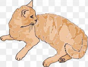 Kitten - Kitten Siberian Cat Wildcat Tabby Cat Clip Art PNG