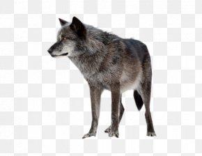 Fire Wolf - Alaskan Tundra Wolf Horse PNG