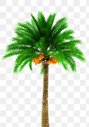 Palm Tree - Date Palm Arecaceae Stock Photography Tree Royalty-free PNG