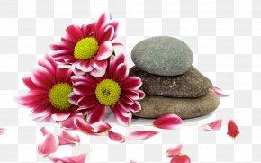 Spa Spa - Stone Massage Spa PNG