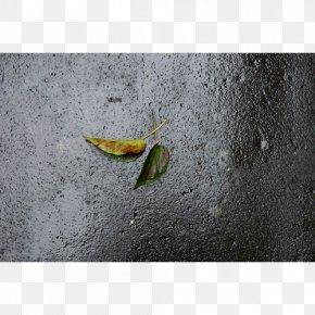Leaf - Stock Photography Leaf Art PNG