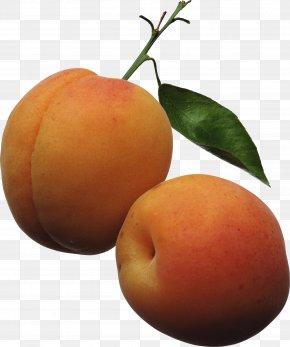Peach Image - Apricot Fruit Peach Clip Art PNG