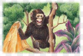 Gorilla - Common Chimpanzee Gorilla Neandertal Monkey Human Behavior PNG