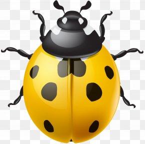 Yellow Ladybird Clip Art - Ladybird Beetle Clip Art PNG