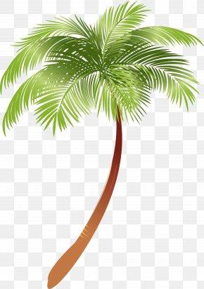 Palm Tree - Arecaceae Asian Palmyra Palm Plant Coconut Milk PNG