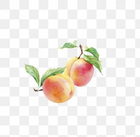 Watercolor Painted Peach Fruit - Peach Watercolor Painting Auglis PNG