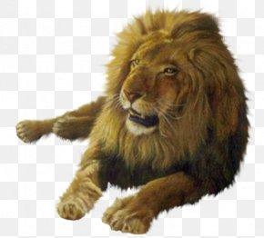 Lion - Lion Desktop Wallpaper Australia PNG