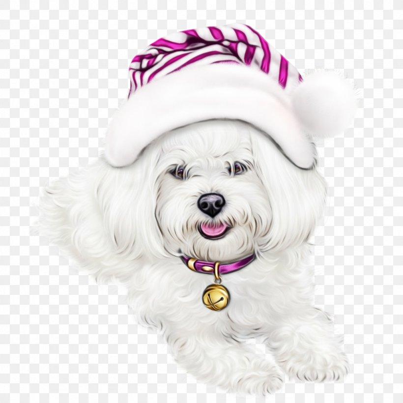 Dog Maltese Bichon Coton De Tulear Havanese, PNG, 1024x1024px, Watercolor, Bichon, Coton De Tulear, Dog, Havanese Download Free