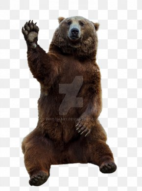 Bear - Grizzly Bear Brown Bear, Brown Bear, What Do You See? Eurasian Brown Bear PNG
