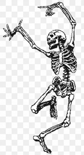 Skeleton - Human Skeleton Skull Clip Art PNG