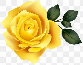 Yellow Rose Clip Art Image - Garden Roses Yellow Clip Art PNG
