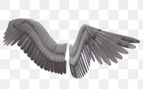 Wings - 3D Computer Graphics Wing Clip Art PNG