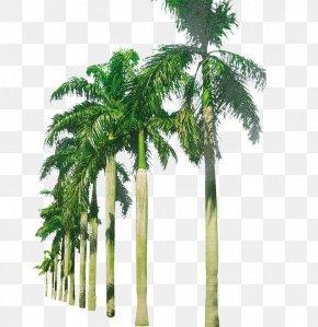 Palm Beach - Coconut Arecaceae PNG