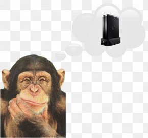 Monkey - Chimpanzee Monkey Ape Japanese Macaque PNG