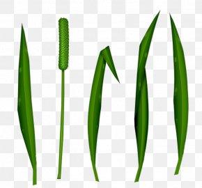Star Background - Leaf Commodity Grasses Plant Stem PNG