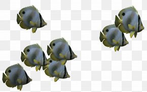 Biological 3d Fish,Cartoon Fish - Fish 3D Computer Graphics Icon PNG