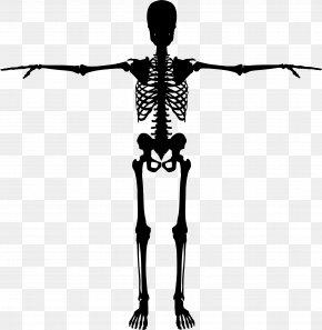 Skeleton - Human Skeleton Bone Human Body PNG