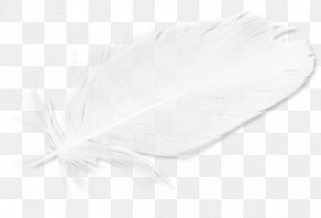 White Feathers - White Feather Black PNG