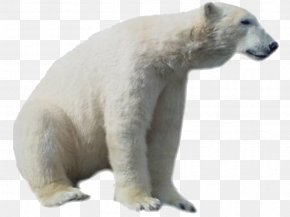 Polar Bear HD - Polar Bear Clip Art PNG