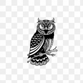 Owl - Owl Drawing Royalty-free Illustration PNG