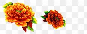 Decorative Chrysanthemum - Chrysanthemum Flower PNG
