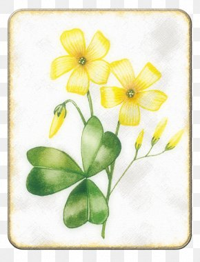 Spring Yellow Canola Flower - Flower Drawing PNG