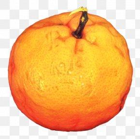 Valencia Orange Accessory Fruit - Winter Background PNG