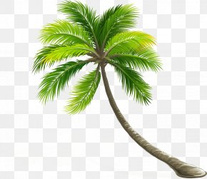 Coconut Tree - Coconut Arecaceae Leaf Tree PNG