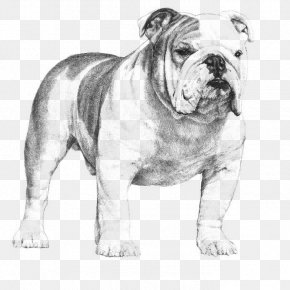 Bulldog - French Bulldog Poodle Puppy American Kennel Club PNG