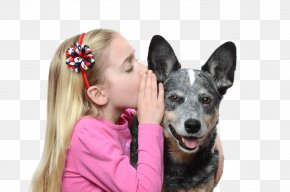 Puppy - Australian Cattle Dog Pug Pet Puppy Why Does My Dog . . . ? PNG