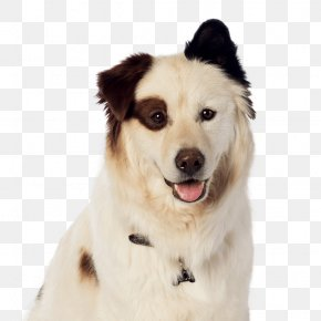 Puppy - Dog Breed El Lenguaje De Los Perros/ The Language Of Dogs Dog With A Blog Bloodhound Border Collie PNG