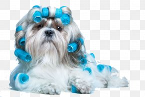 Curly Puppy - Morkie Cat Dog Grooming Pet Hairstyle PNG