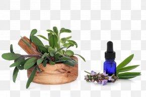 Sage Free Downloads - Essential Oil Deodorant Common Sage Le Petit Marseillais PNG