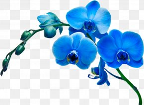 Blue Flower - Moth Orchids Flower Stock Photography Blue PNG