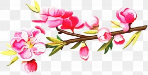 Plant Stem Pedicel - Floral Spring Flowers PNG