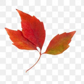 Autumn Leaf Clipart - Autumn Leaf Color Clip Art PNG