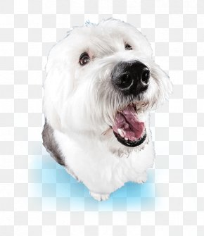 Shampoo - Maltese Dog Havanese Dog West Highland White Terrier Dandie Dinmont Terrier Coton De Tulear PNG