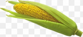 Corn Image - Flint Corn Corn On The Cob Waxy Corn PNG