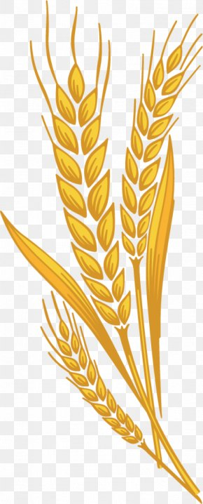 Wheat - Muffin Emmer Common Wheat Cereal Germ Clip Art PNG