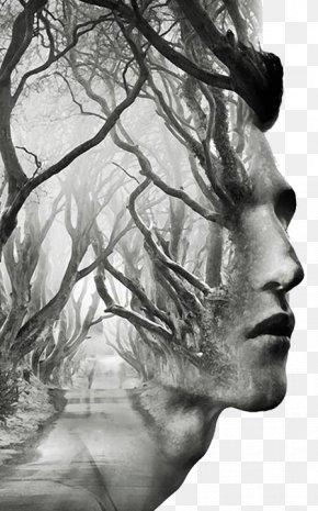 Creative Man Avatar - Dark Hedges Tree Art Multiple Exposure PNG