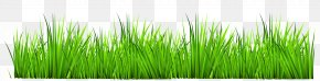 Grass Decor Clipart - Easy English Vocabulary Stock Photography Download Clip Art PNG