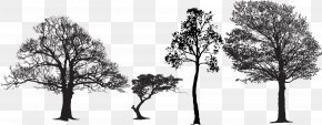 Black And White Artwork Silhouette Of Tree Shape - Tree Euclidean Vector Silhouette Vector Packs PNG