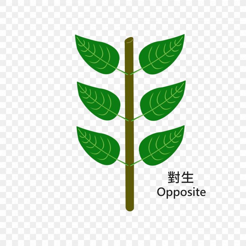 Leaf Logo Plant Stem Font, PNG, 2000x2000px, Leaf, Grass, Logo, Plant, Plant Stem Download Free