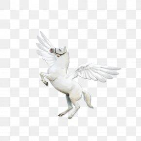 American Quarter Horse Arabian Horse High Definition Television