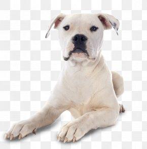 Bulldog - American Bulldog Rottweiler American Bully German Shepherd PNG